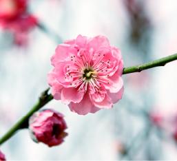 welke bloemen wil jij op je uitvaart